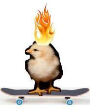 hot chicks on skateboard