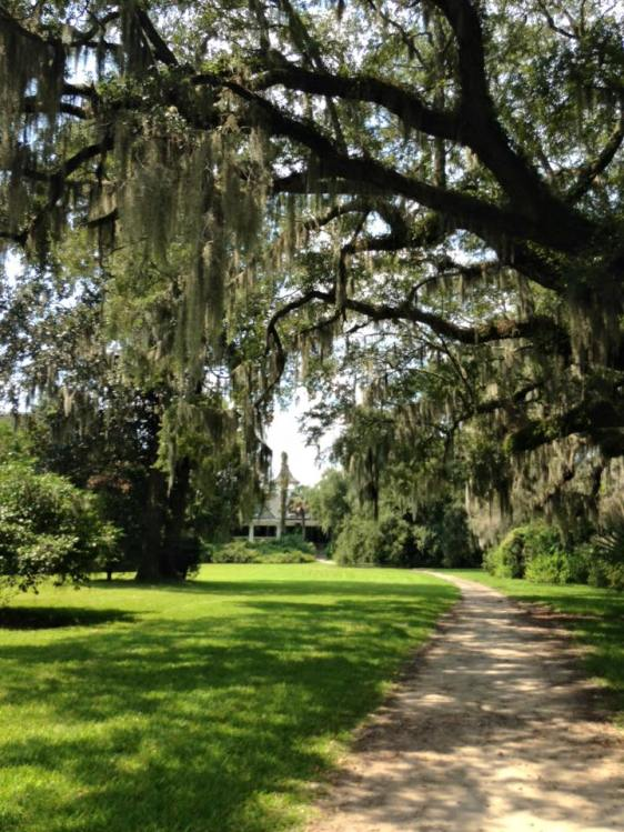The Spanish Moss on the Live Oaktrees